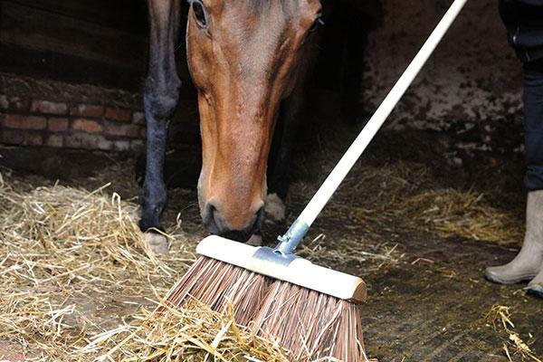 equestrian broom